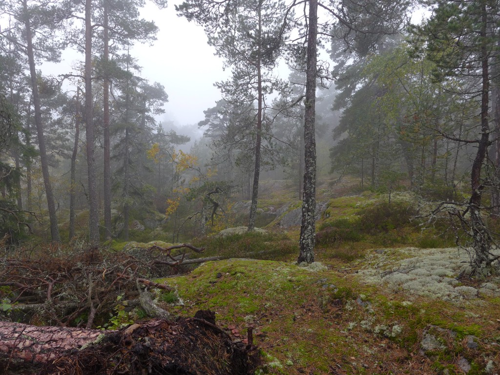 PSchweden04