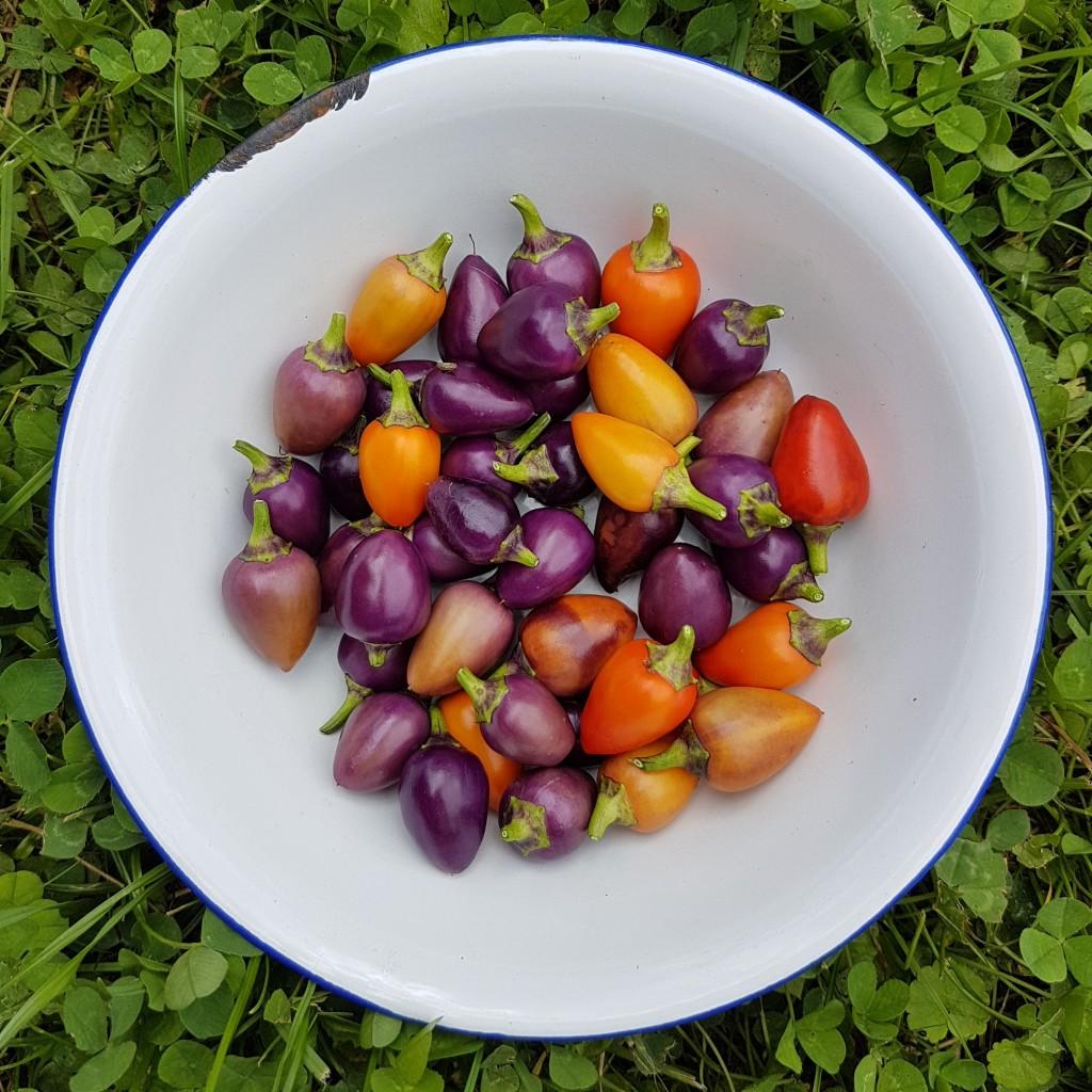 sweet-chili-sauce-06