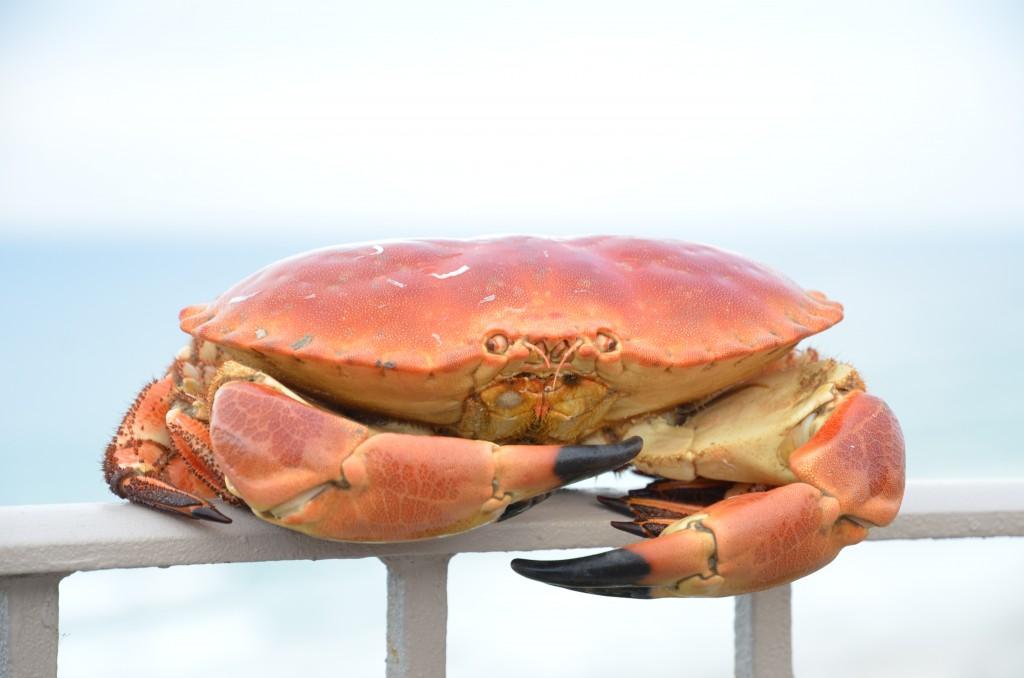 crab-sandwich-01